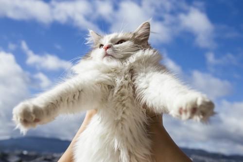 青空をバックに抱き上げられている猫