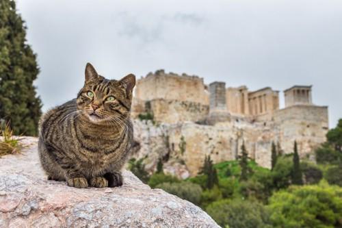 アテネの遺跡と猫