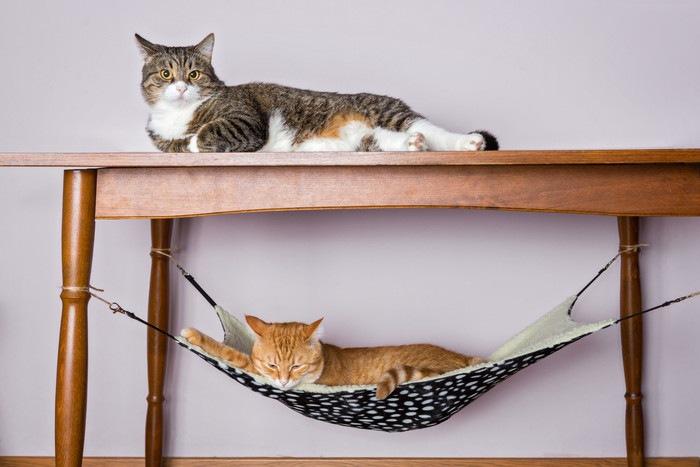 テーブルハンモックとネコ