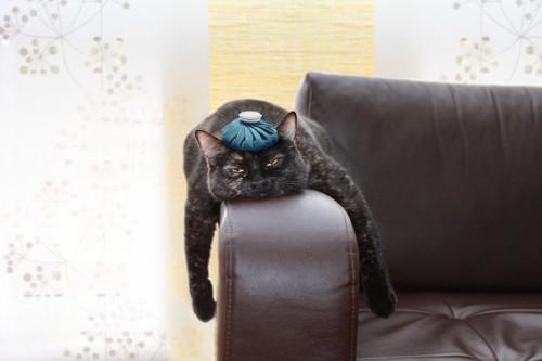 具合が悪い猫