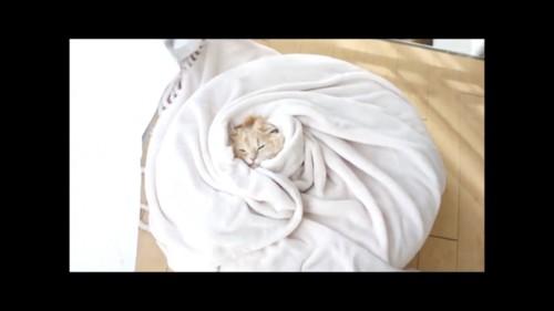 おまけの小籠包猫