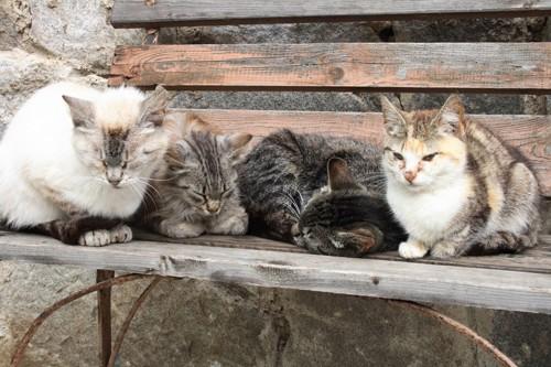 いっぱい集まっている猫