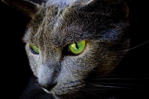 ロシアンブルーの目の色