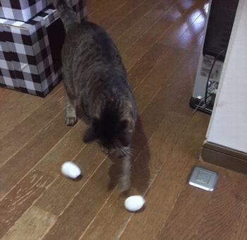 猫が左手でボールを銜えようとしている