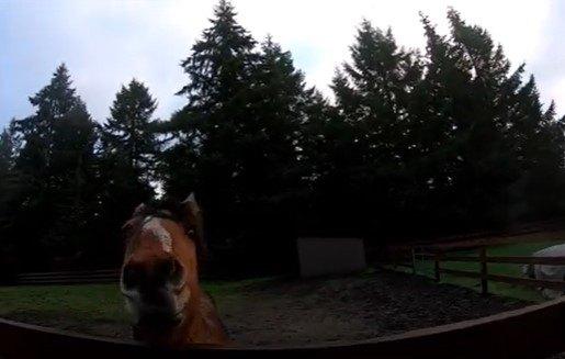 キットバルーを見守る馬