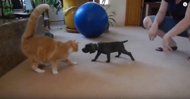 初対面の猫と犬