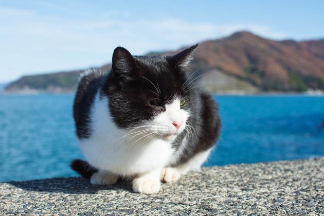 ホタテを待っている猫