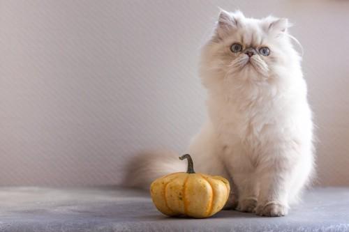 ペルシャ猫