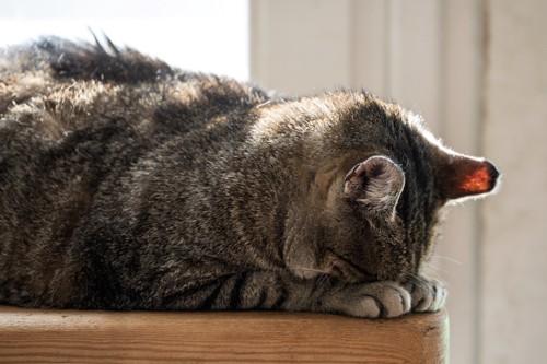 うつ伏せで顔を隠して眠る猫