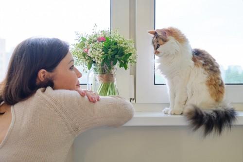 女性と向き合う猫