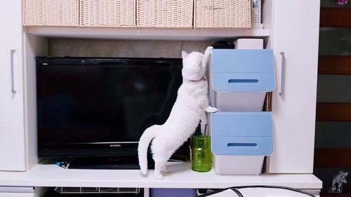 箱に前足をかける猫