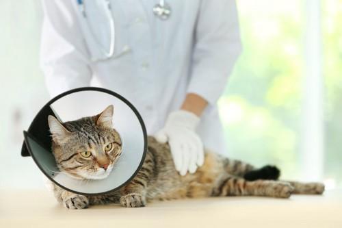 獣医師に診断を受けるエリザベスカラーをした猫