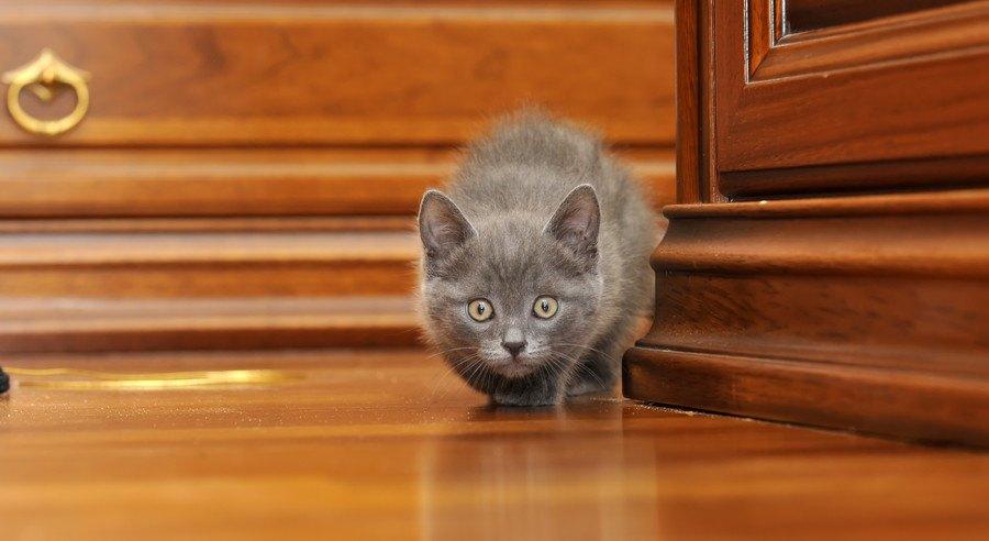 角で待ち伏せしている猫