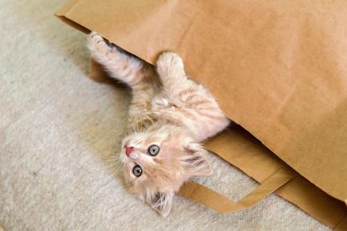 紙袋から上半身を出して寝転がる子猫