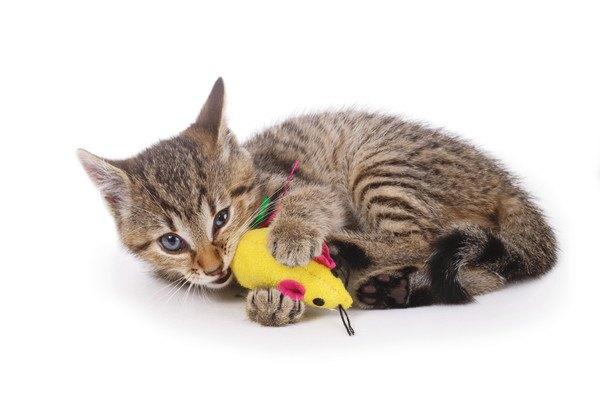 ぬいぐるみを噛む猫