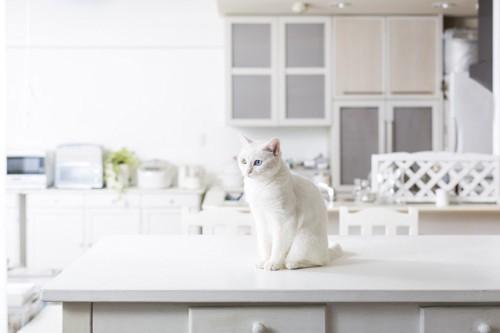 キッチンカウンターの上の猫