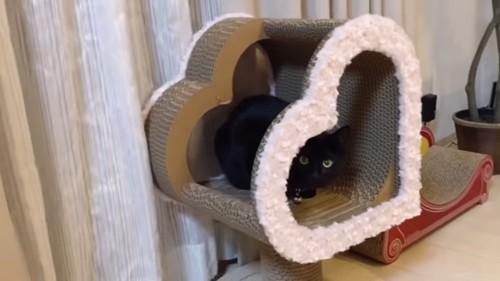 ハート型の爪とぎの中にいる黒猫