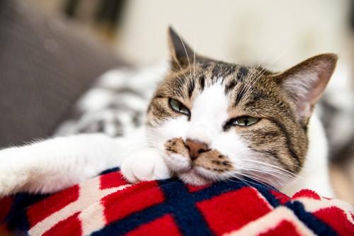 不機嫌そうに目を細める猫