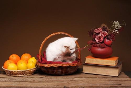 猫とレモンが入ったバスケット