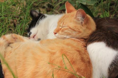 屋外で寄り添って眠る猫