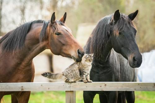 柵に乗った猫のにおいを嗅ぐ馬