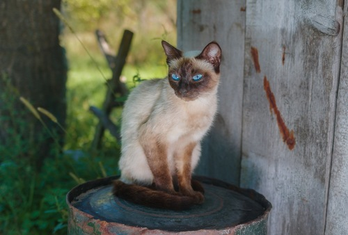 横を向く痩せた猫
