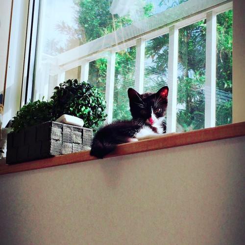 小さいときの窓のオレオ