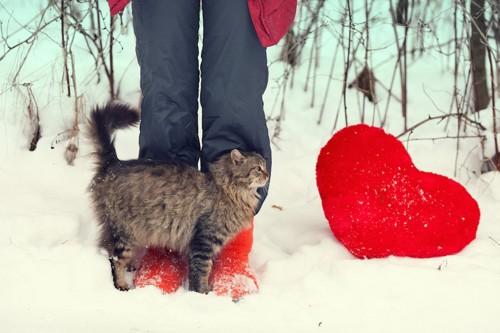 ハートのクッションと飼い主の足に擦り寄る猫