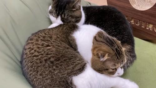 寝る2匹の猫
