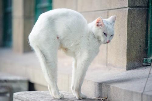 背中を伸ばす猫