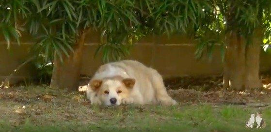 庭にいる犬