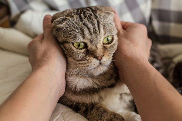 顔を抑えられる猫