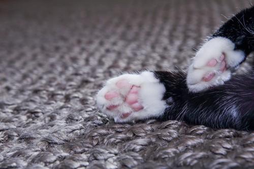 足先が白い猫の前足の肉球