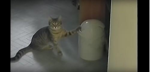 ゴミ箱と猫