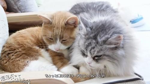 茶色の猫と長毛の猫