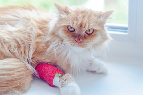 骨折をしてギプスをはめる猫