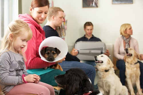 混雑している動物病院の待合室
