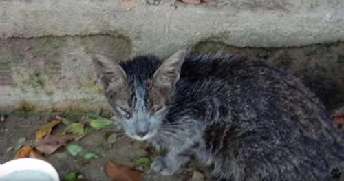 水の入った容器とうずくまるグレーの猫
