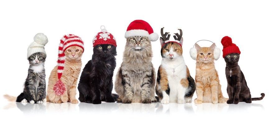 様々な種類の帽子を被った猫たち