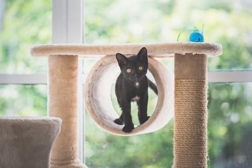 キャットタワーにいる黒猫