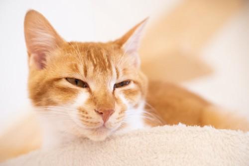 目を細めて眠そうな猫