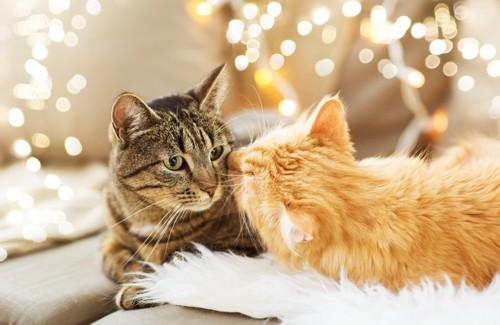 並ぶ二匹の猫