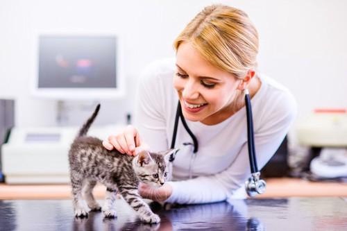 子猫と女性医師