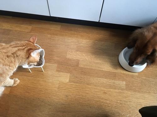 ご飯を食べる犬と猫