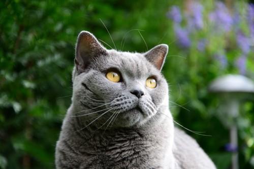英国風の庭にいる猫