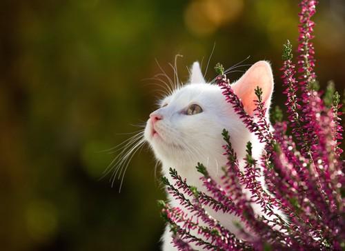 上を見上げる白猫と花