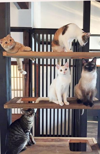 集合する猫達
