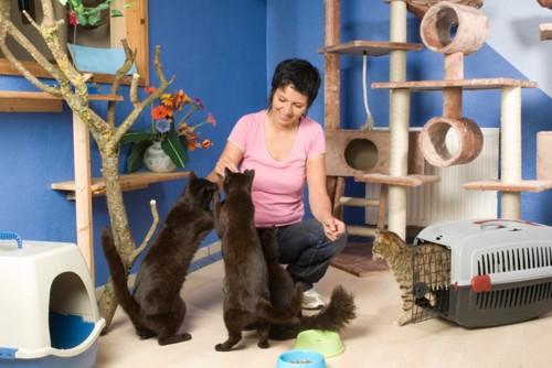 女性と黒猫3匹キジトラ1匹