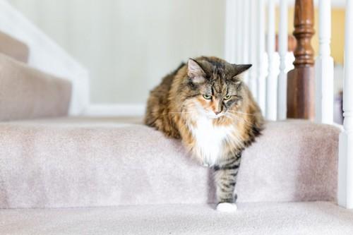 階段を踏む猫
