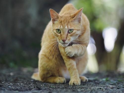 此方を見る野良猫
